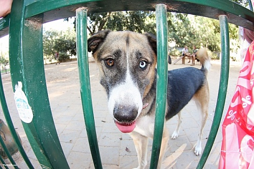 Dog_behind_the_fence_sjpg4265