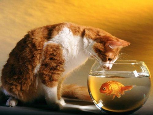 Cat-Temptation-002