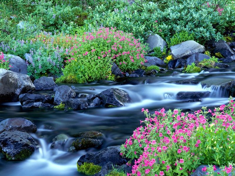 Spring-Flowers-Wallpapers-4