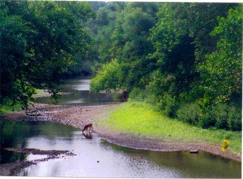 Deer-stream-7