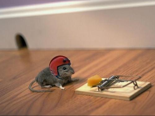 Mouse_trap-t2