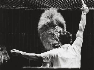 Lion-taming-4